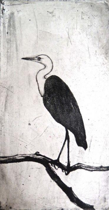 White-necked heron ll