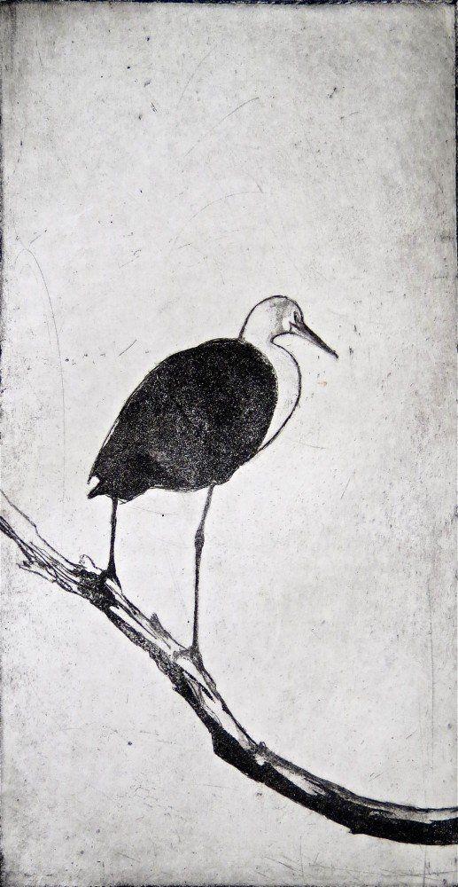 White-necked heron l